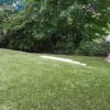 landscaping turf