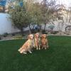 pet friendly artificial outdoor turf
